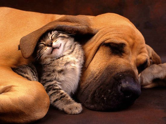 Cat and Dog Makes Great Family Members